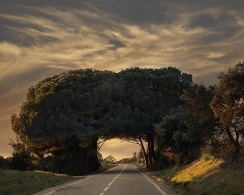 Tree Tunnel, Alentejo, Portugal