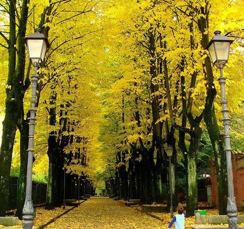 Autumn Street, Italy