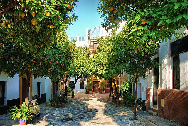 Orange Tree Walk, Santa Cruz, Spain