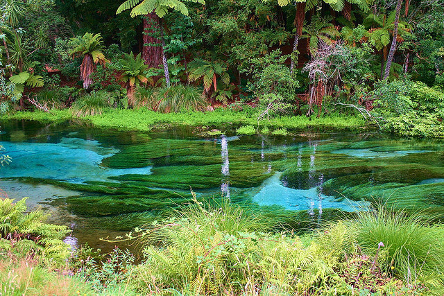 Hamurana Spring is the deepest natural fresh water spring on the North Island of New Zealand.
