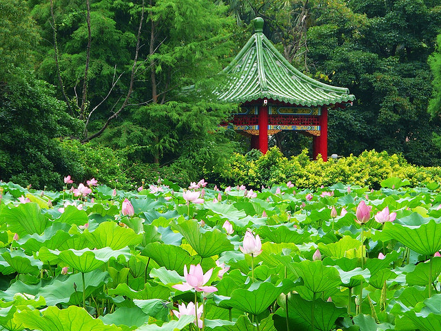 by didy.didy on Flickr.Lotus pond in Taipei Botanical Garden, Taiwan.