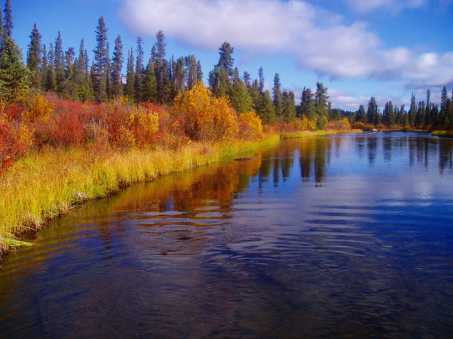 by Dru! on Flickr.Early fall colours at the outlet of Wolverine Lake, Yukon, Canada.
