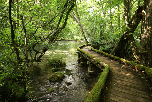 by Naoyuki Yamagishi on Flickr.Passage along the Oirase Stream in Aomori Prefecture, Japan.