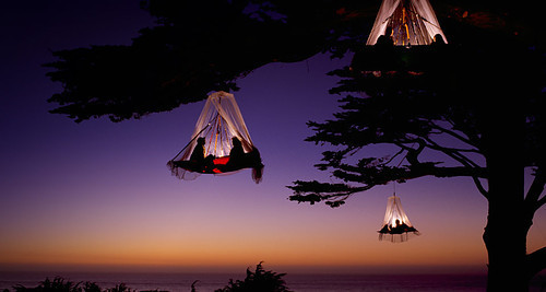 Tree Camping, Elk, California