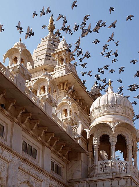 Pigeons above Jaswant Thada Palace in Jodhpur, India