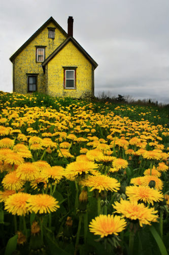 Dandelion House, Nova Scotia