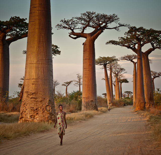 "Avenue of the Baobabs, Madagascar .]]>"" id=""IMAGE-m7lm39eK2y1r6b8aao1_1280″ /></noscript><img class="