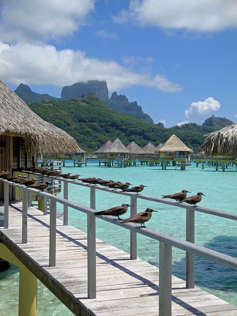 The welcoming committee in Bora Bora, French Polynesia
