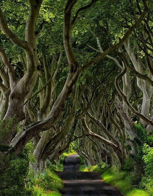 The Dark Hedges, Northern Ireland