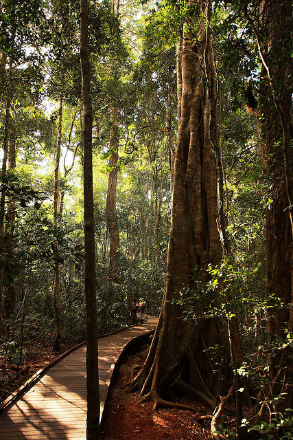 Lamington National Park, rainforest in south-east Queensland, Australia
