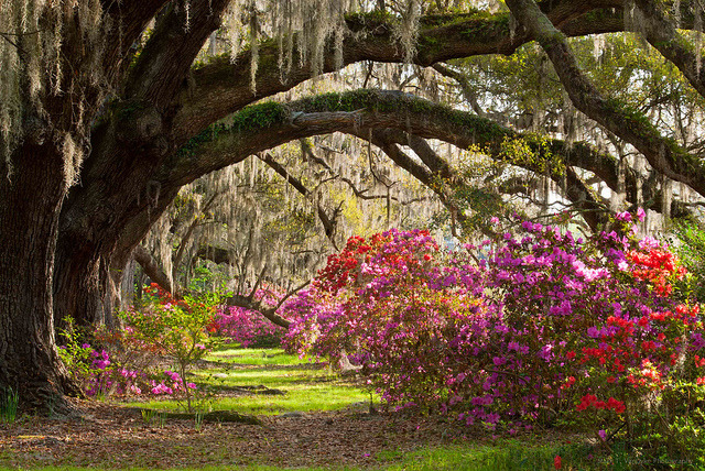 Magnolia Plantation & Gardens in Charleston, South Carolina, USA