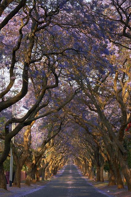 Jacaranda City - Pretoria, South Africa