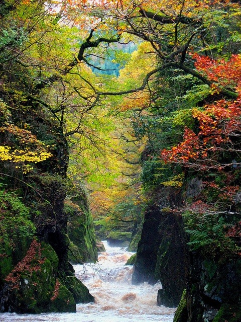The Fairy Glen Gorge, Conwy River, Wales