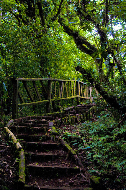 Hiking trail in Mombacho Cloud Forest, Nicaragua