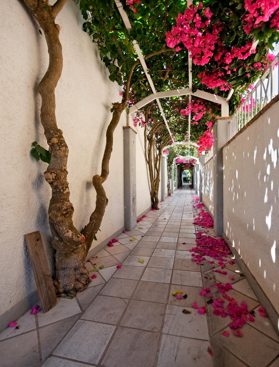 Picturesque alley in Capri Island, Campania, Italy